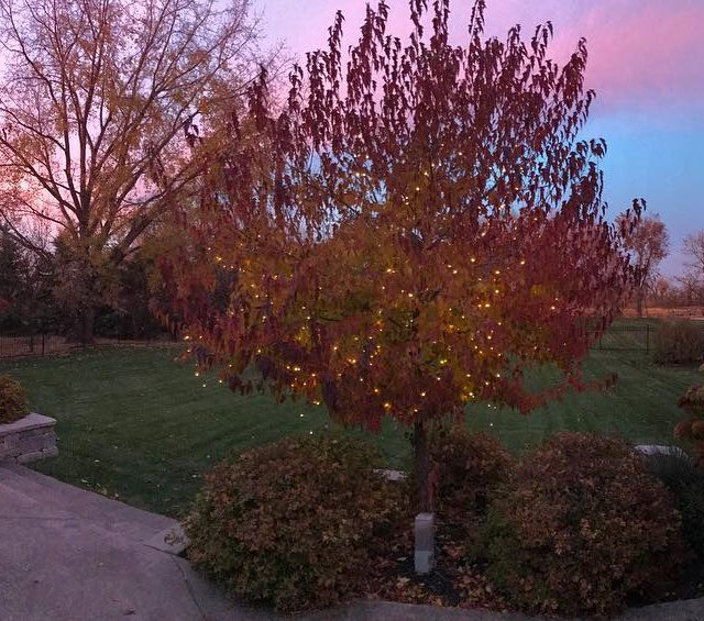 Dang its pretty outside right now! manitoba autumn